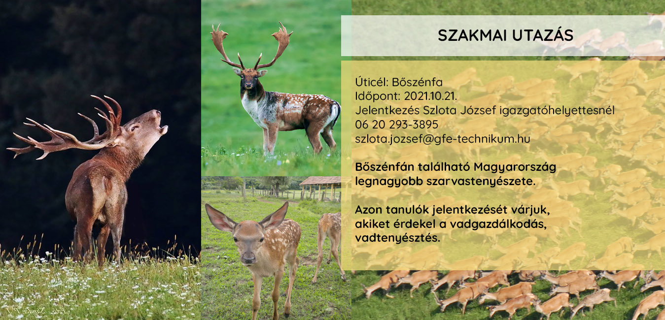 20211012_boszenfa
